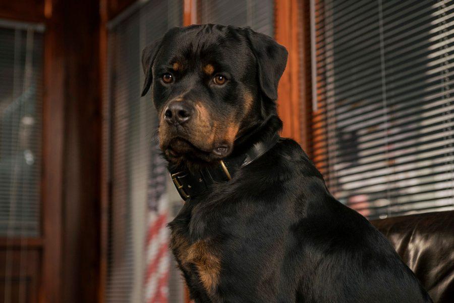 """""""Show Dogs"""": arrivano trailer e caracter poster del film"""